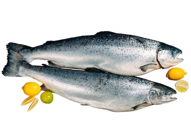 Peixe salmão fresco isolado em um fundo branco.