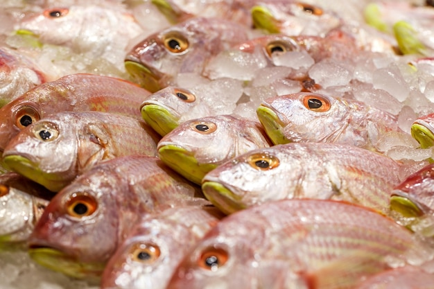 Peixe sultanka barabulka mullidae, fresco cru, resfriado, no mercado de peixes.