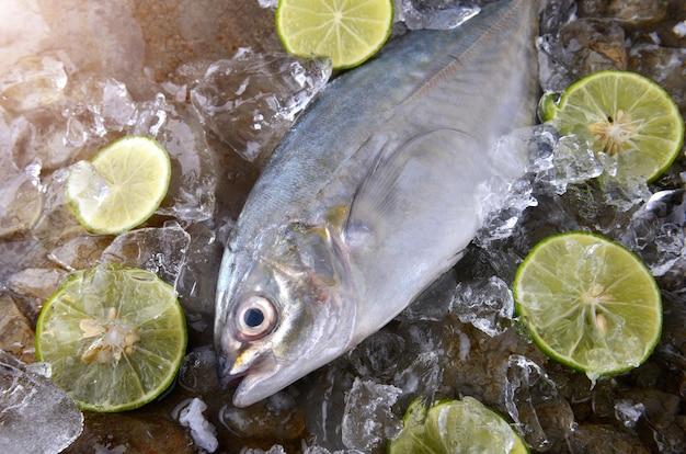 Peixe trevally ou macaco com sal e limão.