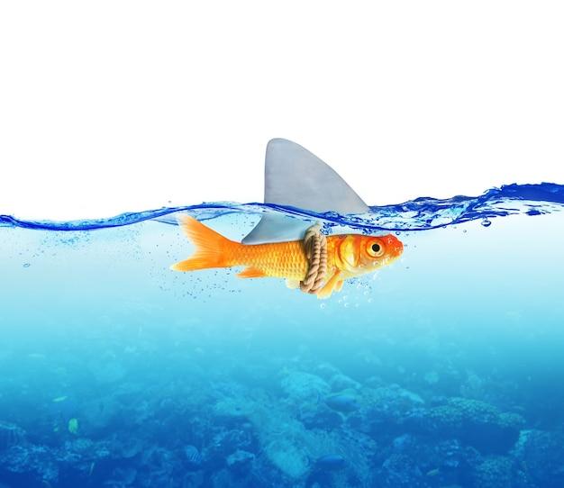 Peixe vermelho como tubarão