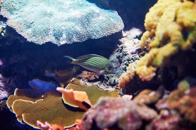 Peixes coloridos na água azul