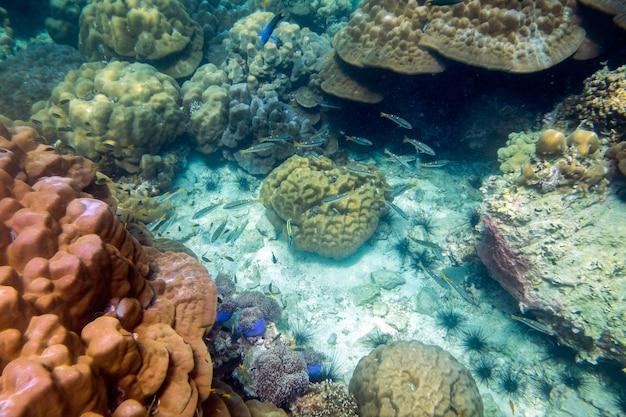 Peixes coloridos subaquáticos do recife de coral se aglomeram no mar de lipe