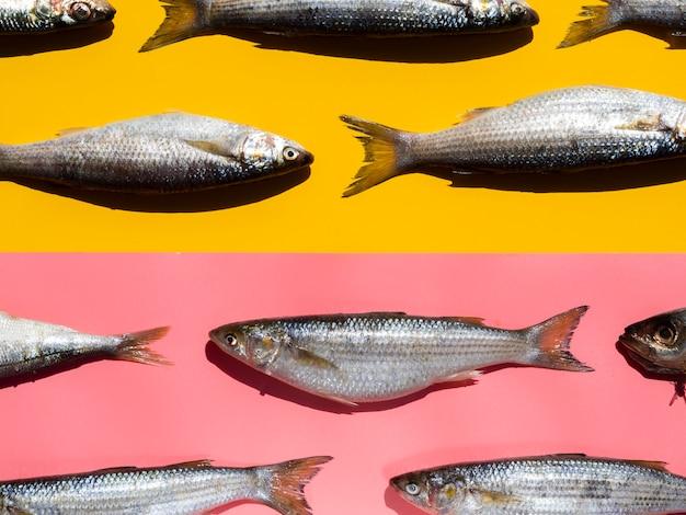 Peixes crus de close-up com brânquias
