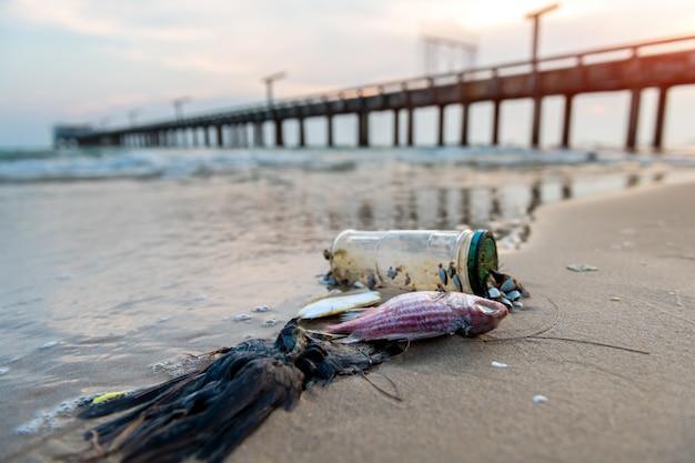 Peixes da morte na praia.