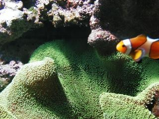 Peixes de aquário, aquário