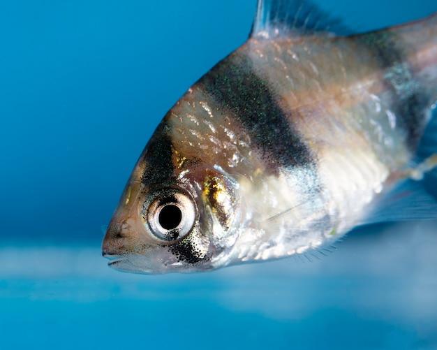 Peixes de aquário, close-up