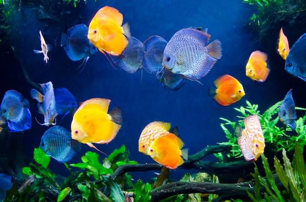 Peixes de recife de coral com ecossistema vegetal