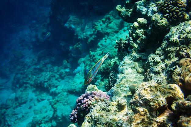 Peixes debaixo d'água