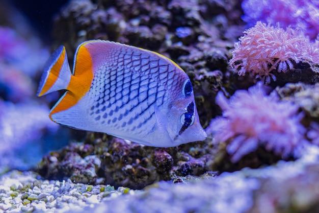 Peixes do mar coloridos no aquário