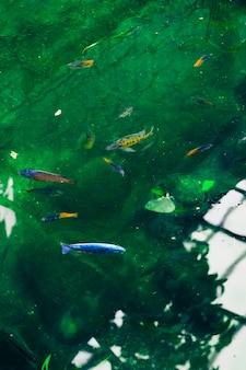 Peixes em uma lagoa