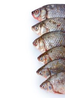Peixes frescos em branco