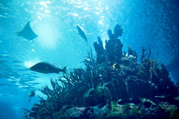 Peixes grandes na água azul