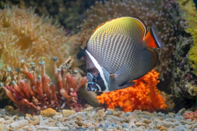 Peixes marinhos com lindos corais