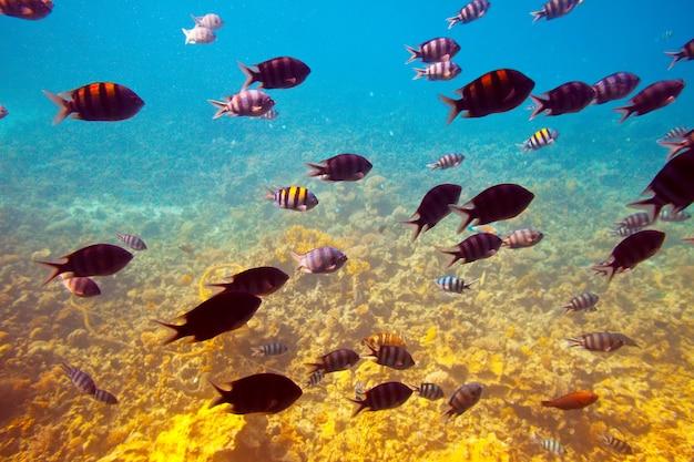 Peixes na área de recifes de coral