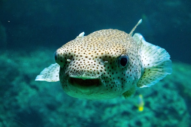 Peixes no aquário, vida marinha, debaixo d'água, cores verdes, vida selvagem da natureza, nadando na água salgada.