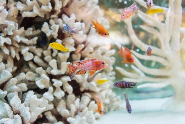 Peixes no recife de coral branco r
