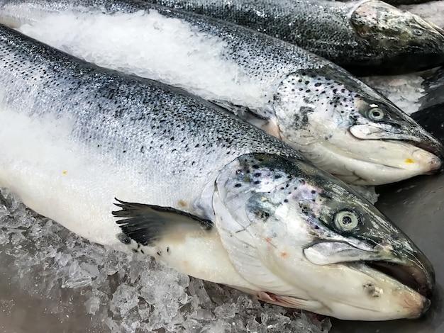 Peixes salmon frescos no gelo no mercado ou na loja.