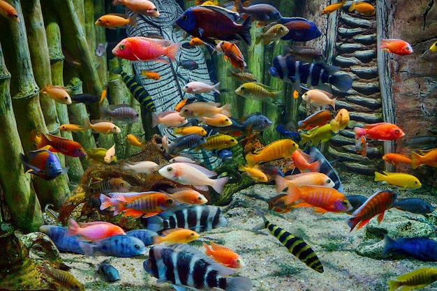 Peixes tropicais coloridos e vida marinha subaquática em um aquário