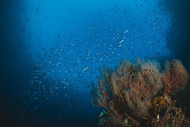 Peixes tropicais e recife de corais na luz solar