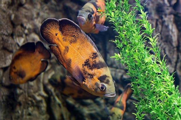 Peixes tropicais nadam perto de recifes de corais. vida subaquática.