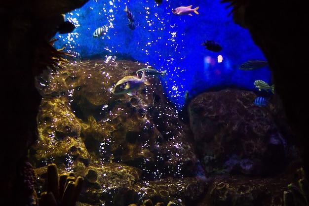 Peixes tropicais vivendo debaixo d'água