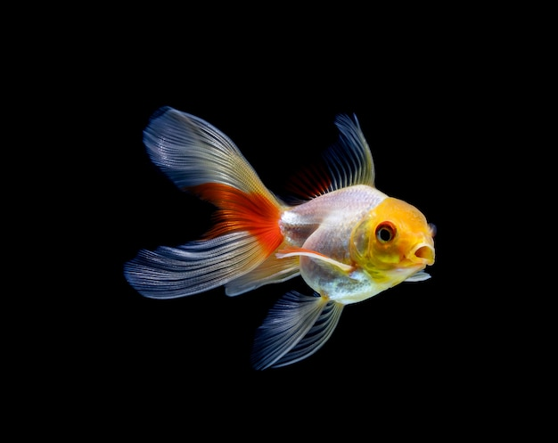 Peixinho isolado em um fundo preto escuro
