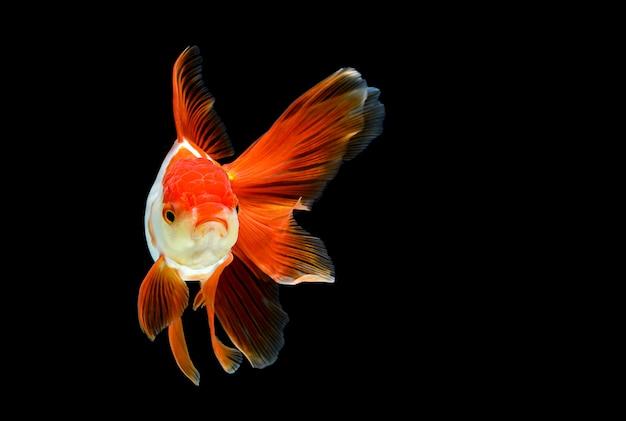 Peixinho isolado em um preto escuro