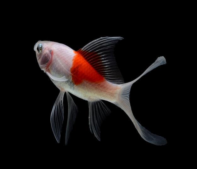Peixinho isolado no espaço em branco