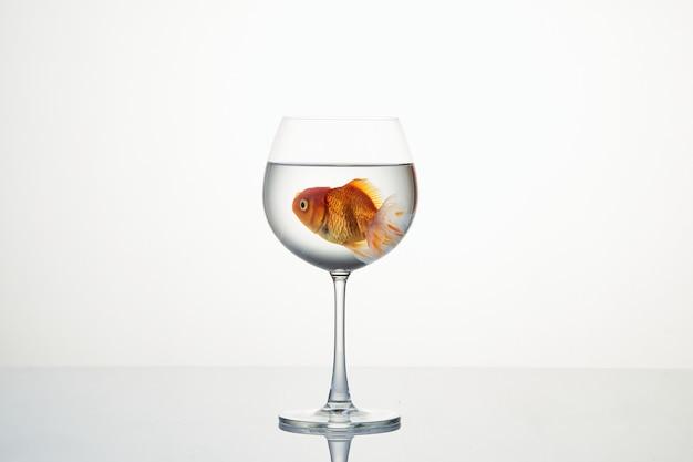 Peixinho se movendo no copo de água