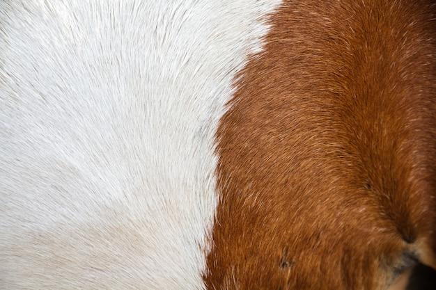 Pele de cavalo