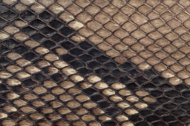 Pele de cobra genuíno, fundo de textura de couro, closeup,