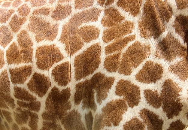 Pele de couro genuíno de girafa