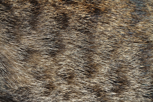 Pele de gato cinza para o fundo