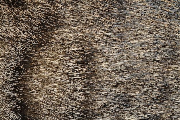 Pele de gato cinza para o fundo Foto Premium