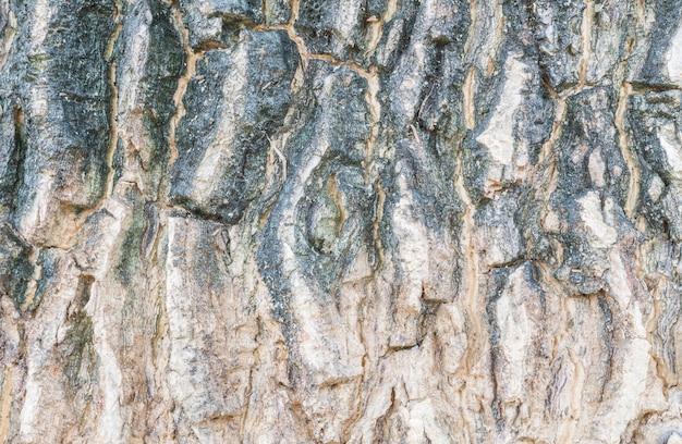 Pele de superfície closeup de tronco de fundo de textura de árvore