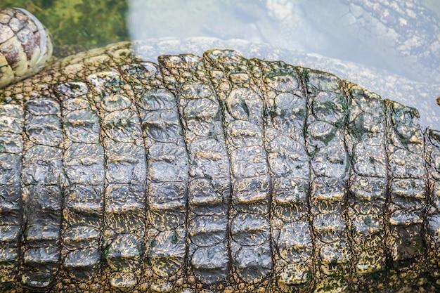 Pele de textura de crocodilo com fundo de água