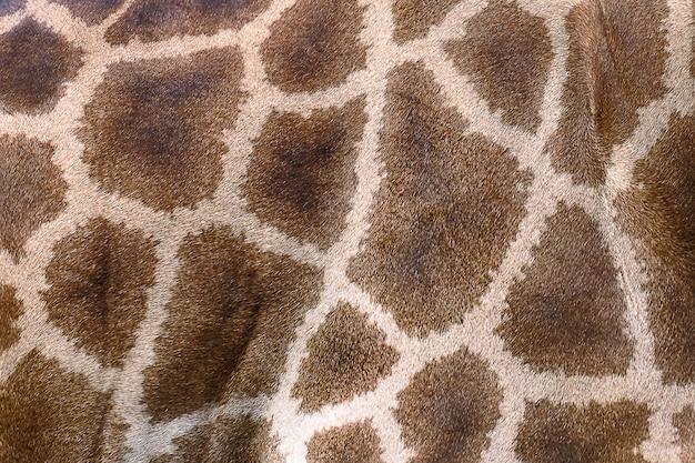 Pele texturizada de girafa.