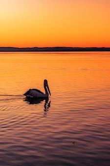 Pelicano solitário nadando no mar com a bela vista do pôr do sol