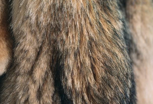 Pêlo de animal. raposas, guaxinim, lobo, castor, marta, nutria pendurado após o processamento.