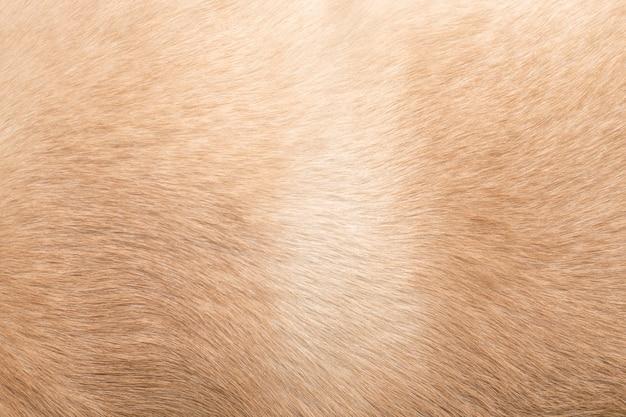 Pêlo de cachorro. plano de fundo para temas sobre problemas de cabelos com cães