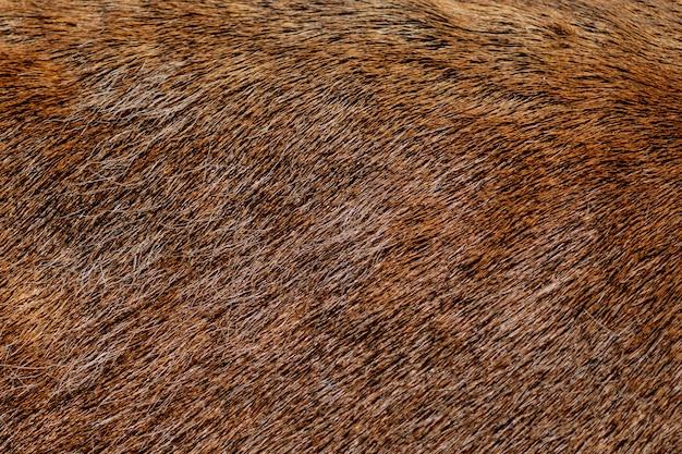 Pêlo de veado marrom usado como pano de fundo