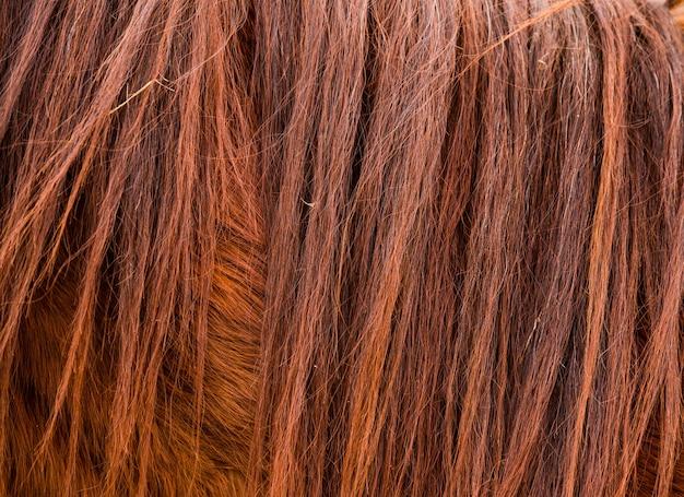 Pêlo marrom de cavalo e textura de crina ou plano de fundo