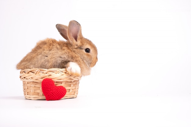 Peludo e fofo coelho marrom vermelho fofo orelhas eretas estão sentados na cesta e ninhada coração vermelho