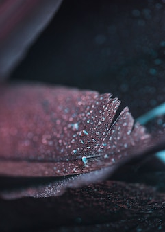 Pena colorida bonita fresca molhada no fundo textured
