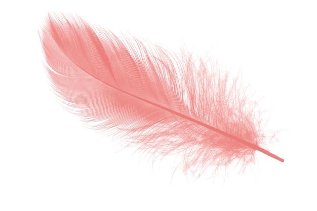 Pena cor-de-rosa coral no fundo branco