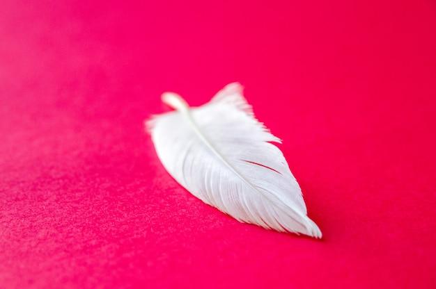 Pena de asa de pássaro branca isolada em fundo vermelho
