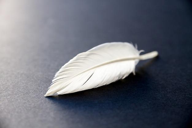 Pena de asa de pássaro branca repousando sobre um fundo escuro e elegante