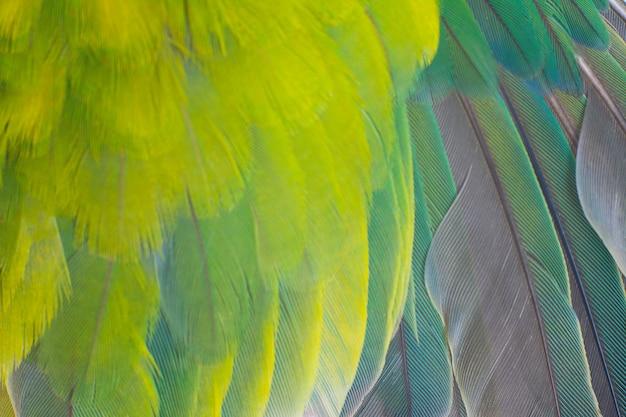 Pena de papagaio de asa verde