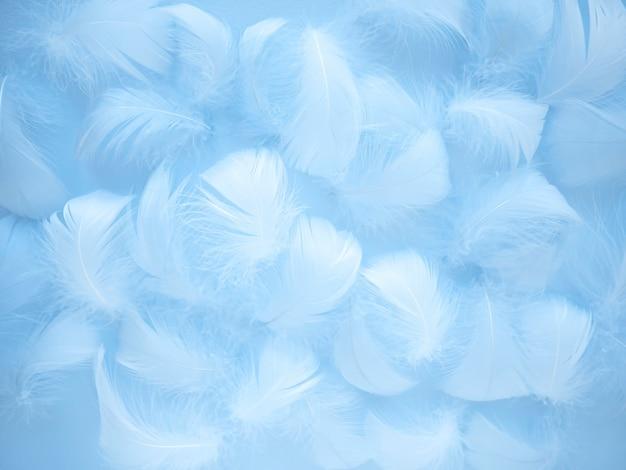 Pena de pássaro azul em um estilo desfocado suave