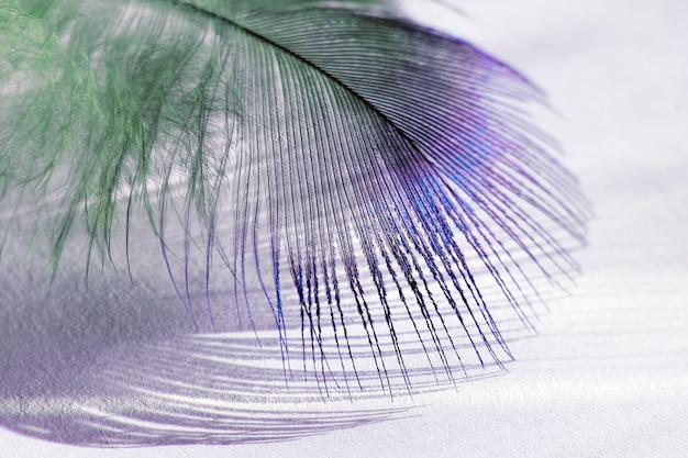 Pena de pássaro colorida deitada no papel branco sob a luz do sol